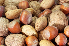 Free Nuts Royalty Free Stock Photography - 8021147