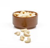 Nuts Acajoubaum Lizenzfreies Stockfoto