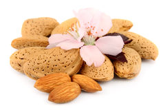 Nuts of almonds Royalty Free Stock Photo
