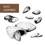 Nuts. Almonds Stock Images