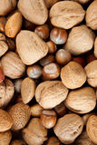 Nuts of autumn Stock Photography