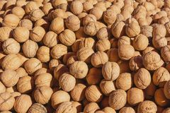 Nuts in autumn Stock Photography