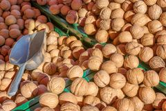 Nuts in autumn Royalty Free Stock Images