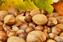 Nuts and autumn leaves Royalty Free Stock Photo