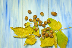 Nuts and autumn leaves on a blue wooden background Royalty Free Stock Images