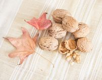 Nuts. Autumn still life with nuts and leaves Stock Photos