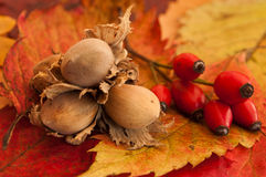 Nuts on autumnal leaves Stock Image