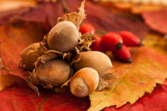 Nuts on autumnal leaves Royalty Free Stock Photos