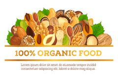 Nuts at banner made for vegetarian organic food. Organic food banner made of nuts. Vegetarian or vegan nutrition ingredients like nutmeg, walnut and hazelnut Royalty Free Stock Photos