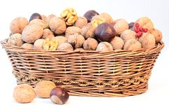 Nuts basket Stock Photography