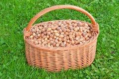 Nuts in basket. Hazelnuts in wicker hamper Stock Image