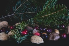 Nuts and berries with a fresh cut branch off a Christmas pine tr royalty free stock photo