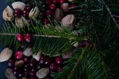 Nuts and berries with a fresh cut branch off a Christmas pine tr stock image