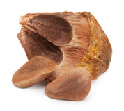 Nuts from cedar pine cone Royalty Free Stock Image