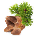 Nuts from cedar pine cone Royalty Free Stock Photo