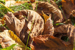 Nuts Chestnut autumn Royalty Free Stock Photography