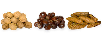 Nuts, chestnuts and cones. Isolated on a white background Royalty Free Stock Photos