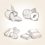 Nuts and Chocolate Illustrations. Nuts and chocolate can be used in a study on  drawings Royalty Free Stock Photography