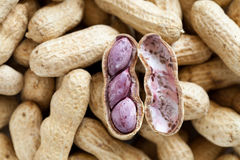 Nuts. Stock Image