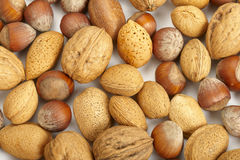 Nuts collection Stock Image