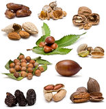 Nuts collection. Royalty Free Stock Image