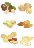 Nuts collection Stock Photography