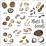 Nuts collection drawings. Sketches. Stock Image