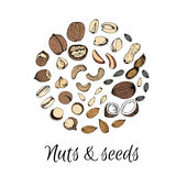 Nuts collection drawings. Sketches. Royalty Free Stock Photography