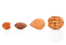 Nuts collection on white. Royalty Free Stock Photo