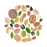Nuts Composed in Circle Shape. royalty free illustration