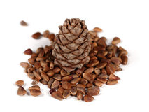 Nuts and Cone of Siberian Pine royalty free stock photography