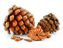 Nuts and Cone of Siberian Pine Isolated on White Royalty Free Stock Photo