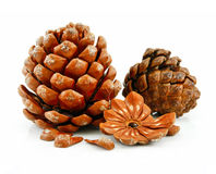 Nuts and Cone of Siberian Pine Isolated on White Stock Images