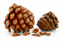 Nuts and Cone of Siberian Pine Isolated on White Royalty Free Stock Images