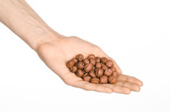 Nuts and cooking theme: man's hand holding a peeled hazelnuts isolated on a white background in studio Royalty Free Stock Photography