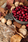 Nuts and cranberries Stock Photography