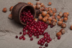 Nuts and cranberries Stock Photo