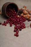 Nuts and cranberries Royalty Free Stock Images