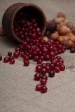 Nuts and cranberries Royalty Free Stock Photography