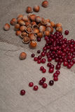 Nuts and cranberries Stock Photos