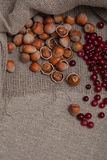 Nuts and cranberries Royalty Free Stock Image