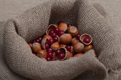 Nuts and cranberries Stock Image