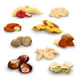 Nuts Decorative Set Stock Photography