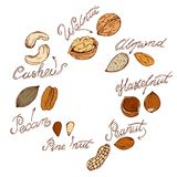 Nuts. Different nuts drawn by hand in retro style, sketching Royalty Free Stock Image
