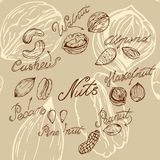 Nuts. Different nuts drawn by hand in retro style, sketching Stock Photography
