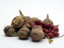 Nuts e selvaggio è aumentato Fotografie Stock Libere da Diritti