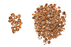 Nuts and empty nutshells Stock Images