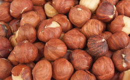 Nuts a filbert. Close-up Stock Photography