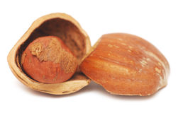Nuts a filbert  in a shell Stock Images