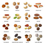 Nuts Flat Icons Set Royalty Free Stock Images